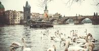 Lidé našli u pražské náplavky ve Vltavě mrtvolu - anotační obrázek