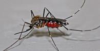 WHO zvedá varovná prst: Malárie zabije v subsaharské Africe víc lidí než covid - anotační foto