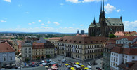 Byt v Brně obsadilo 16 netopýrů, seniorka na ně zavolala policii - anotační obrázek
