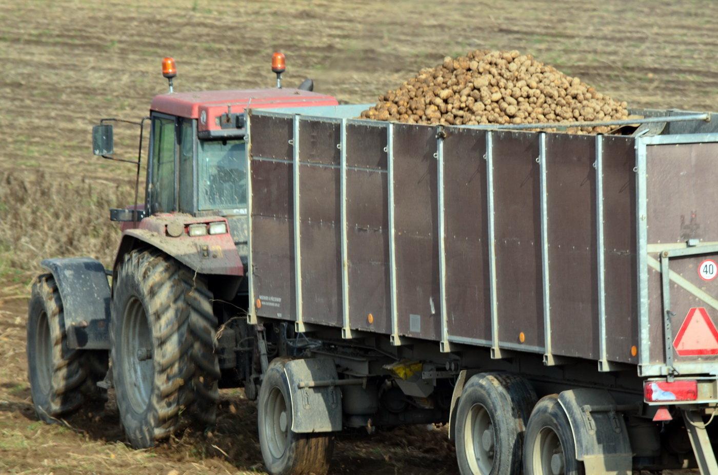 Sklizeň brambor