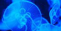 medúzy, ilustrační fotografie