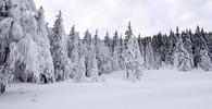 Česko zasáhnou silné mrazy. Teploty klesnou na mínus 20 - anotační obrázek