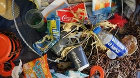 Jak vyřešit celosvětový problém s plasty? Náhodný vědecký objev může ovlivnit život na planetě - anotační foto
