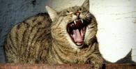 V Česku se potuluje extrémně vzácná divoká kočka - anotační obrázek