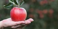 Objevení gravitace: Opravdu spadlo Newtonovi na hlavu jablko? - anotační obrázek