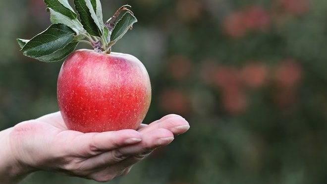 Opravdu spadlo Newtonovi na hlavu jablko?