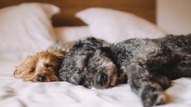 Dovolíte psům spát v posteli?
