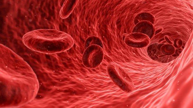 Krev je fascinující tekutina. K pití ale není