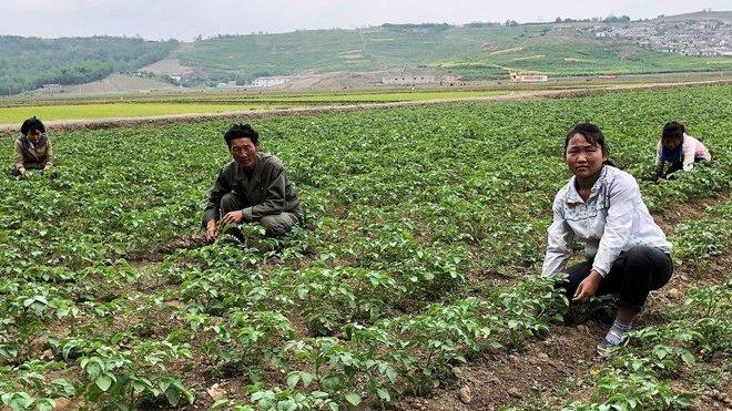 Severní Korea - Na takových polích se konají popravy běžně.