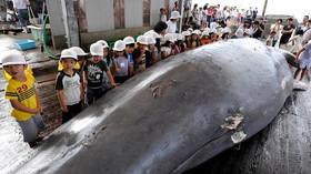 Japonsko po 31 letech obnovilo komerční lov velryb